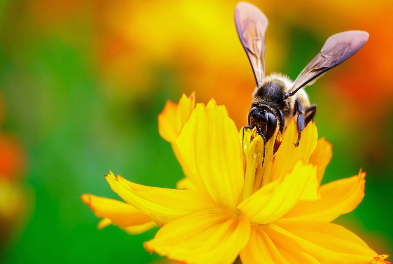 bee-small